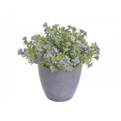 Kwiatuszki w doniczce 18 cm