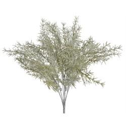 Asparagus X 7 zielony