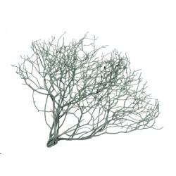 Tulsi-gałązka drzewiastego...