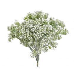 Bylinka krzewinka biała 23 cm