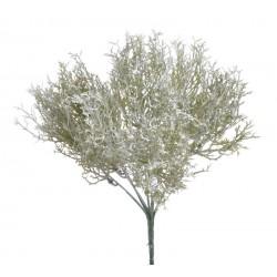 Marchewkowiec biały 30 cm