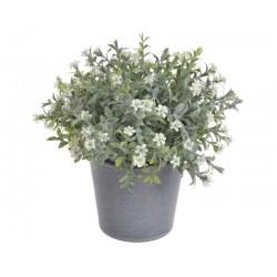 Kwiatuszki w doniczce 20 cm