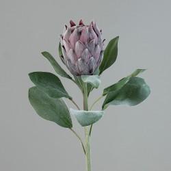 Protea fioletowa 72 cm