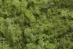 CANWG001-250_AGR-..Island-Moss-250g-pre-kol..27x27cm..40bag......APPLE-GREEN